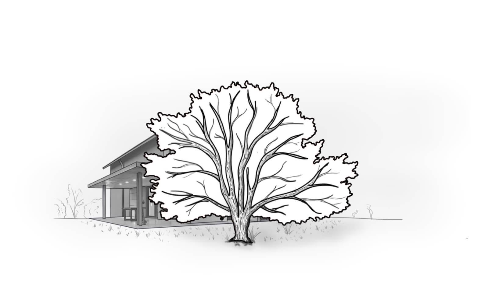 Baum schneiden und Baumpflege München