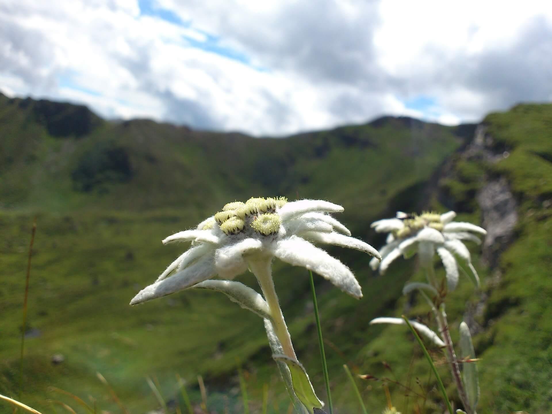 edelweiss-baumpflege.muenchen.bild