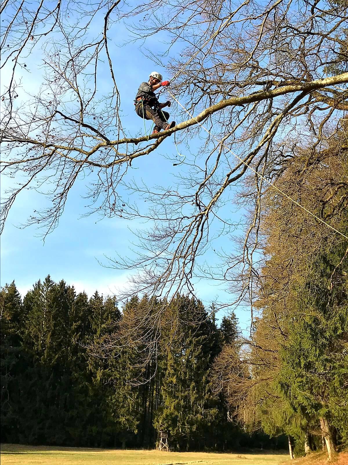 Baumpflege Istrien